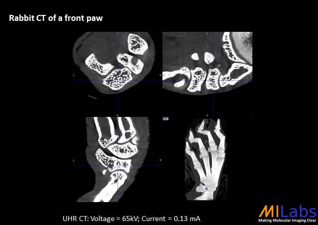 07400-Rabbit-Bone-MILabs-PET,SPECT,CT,OI
