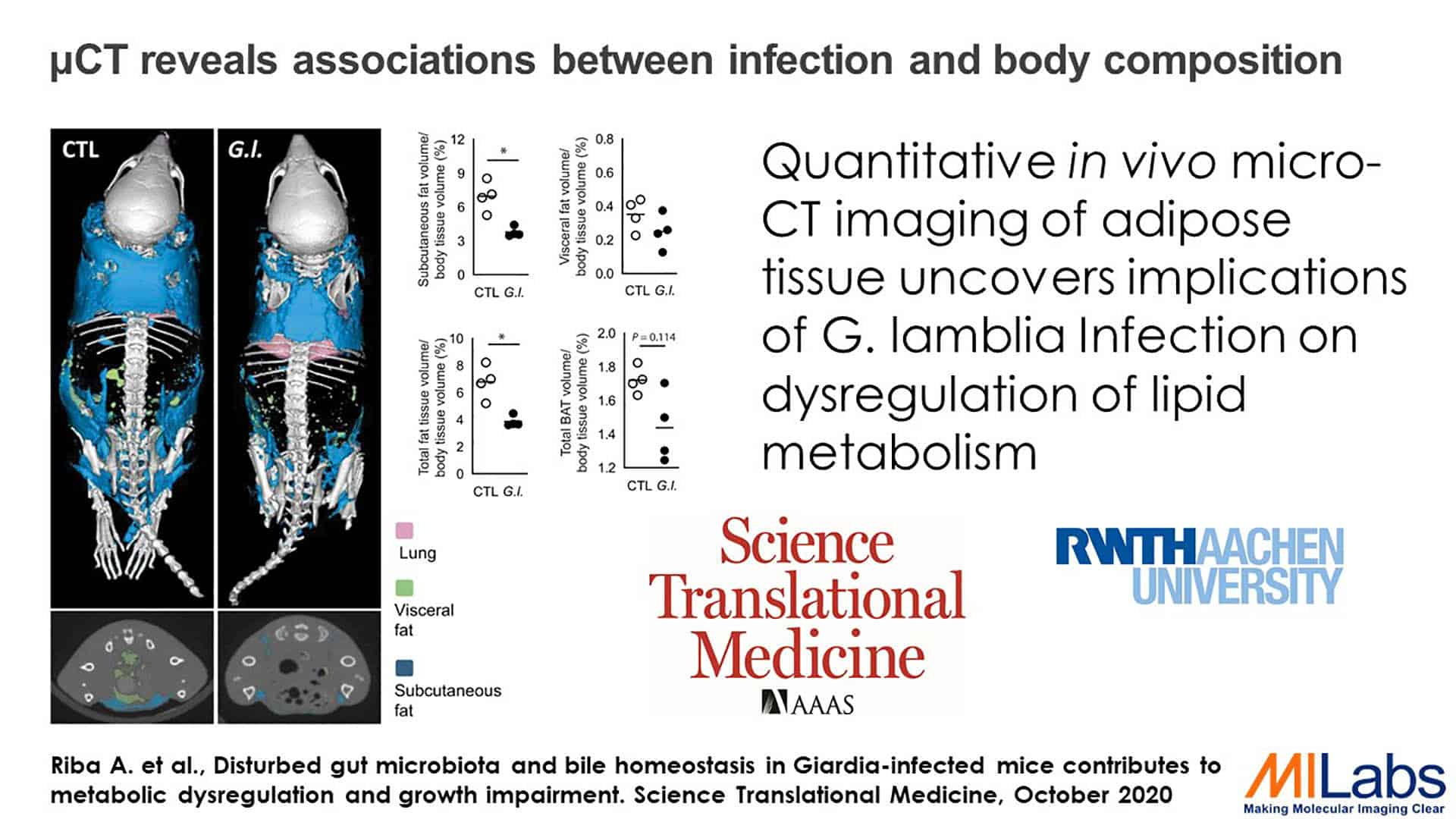 microCT reveals association between infection and body composition