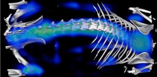 thumbnail of webinar - Felix Gremse optical imaging