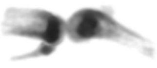 Mouseknee