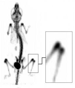 Figure 5L PET
