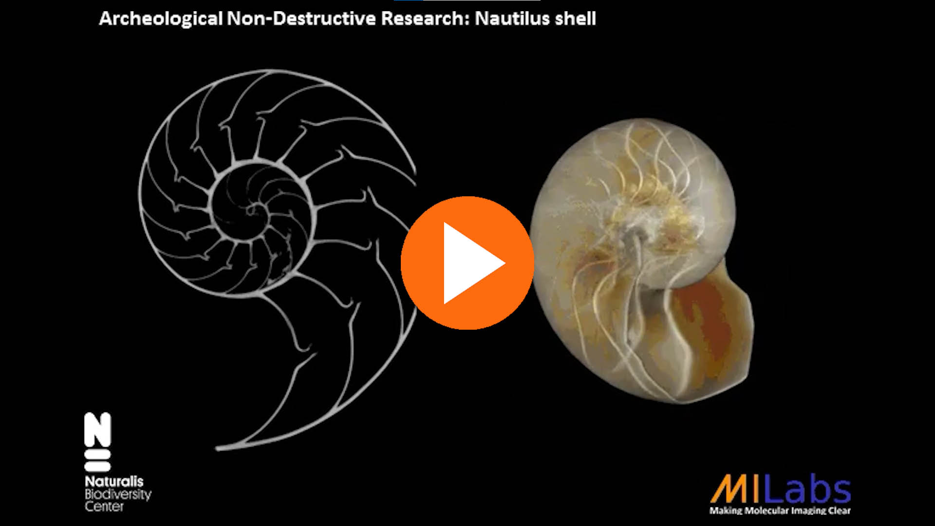 archeological non desctuctive research of nautilus shell with microCT