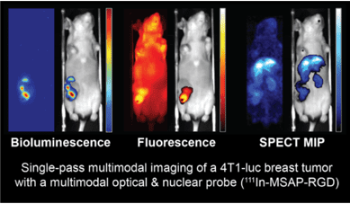 bioluminescence - fluorescence and spect mouse imaging