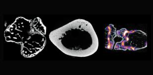 muskuloskeletal preclinical imaging