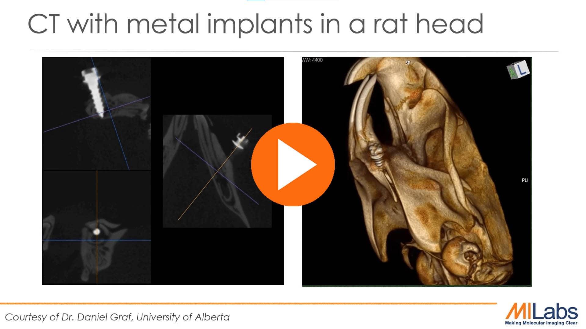 CT metal implants in rat head