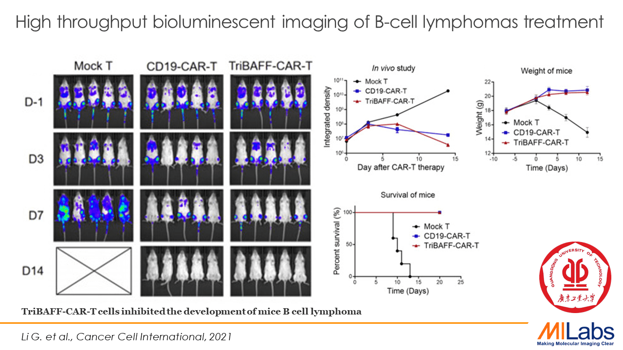 bioluminescent imaging of b-cell lymphomas