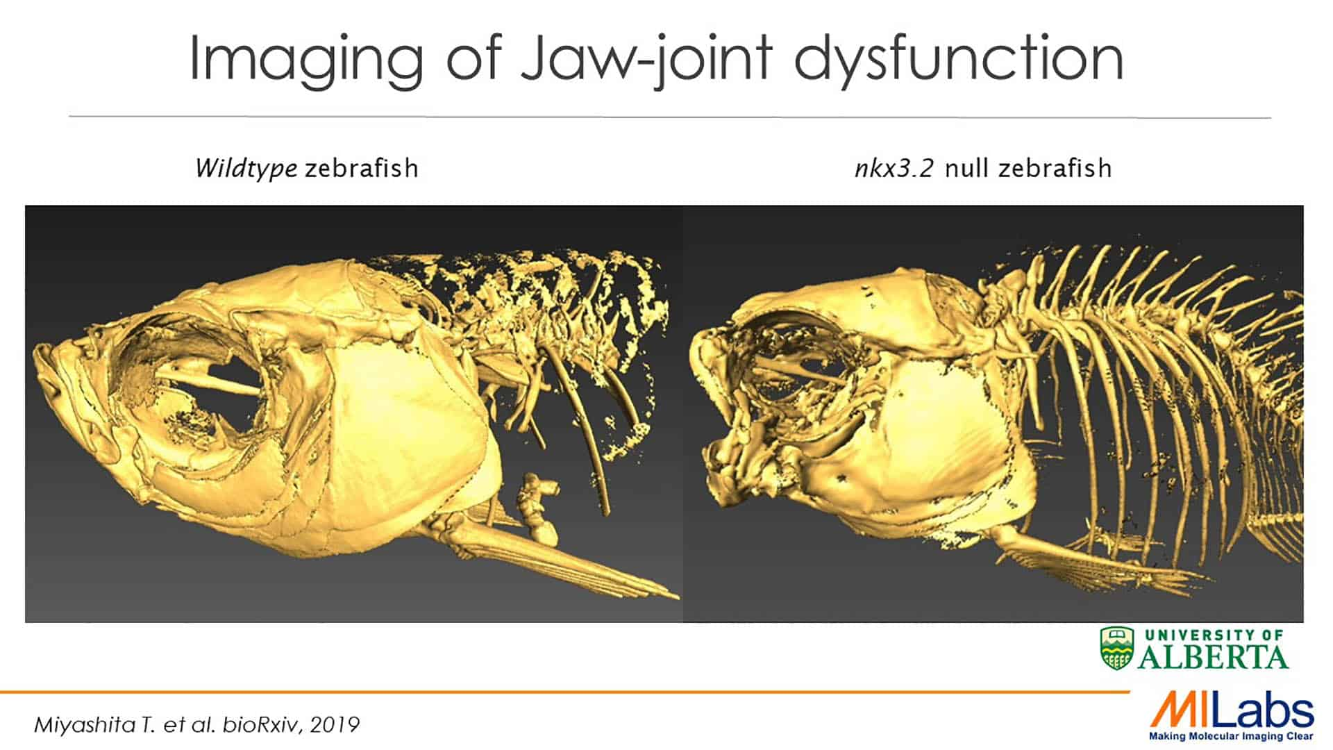 preclinical imaging jaw joint dysfunction