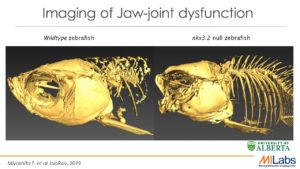 zebrafish imaging, fish imaging, preclinical, zoology