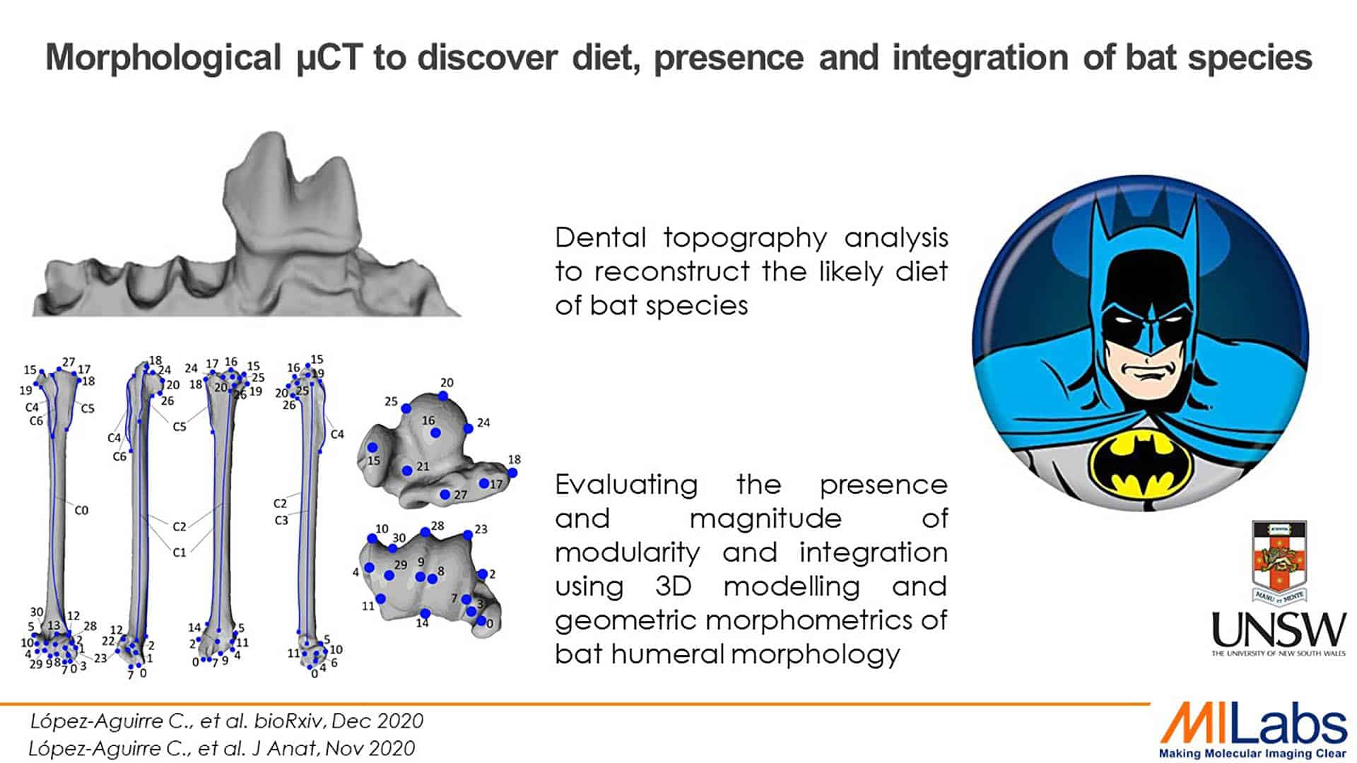morphological microCT to discover diet present and integration of bat species