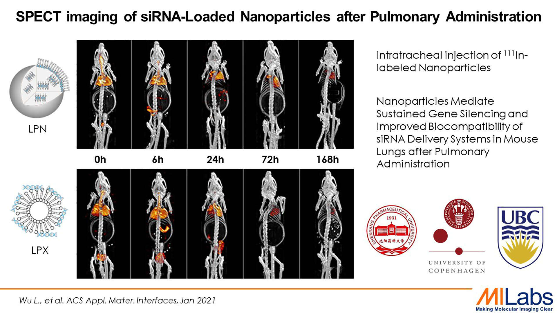 micro SPECT imaing of siRNA loaded nanoparticles after pulmonary administration