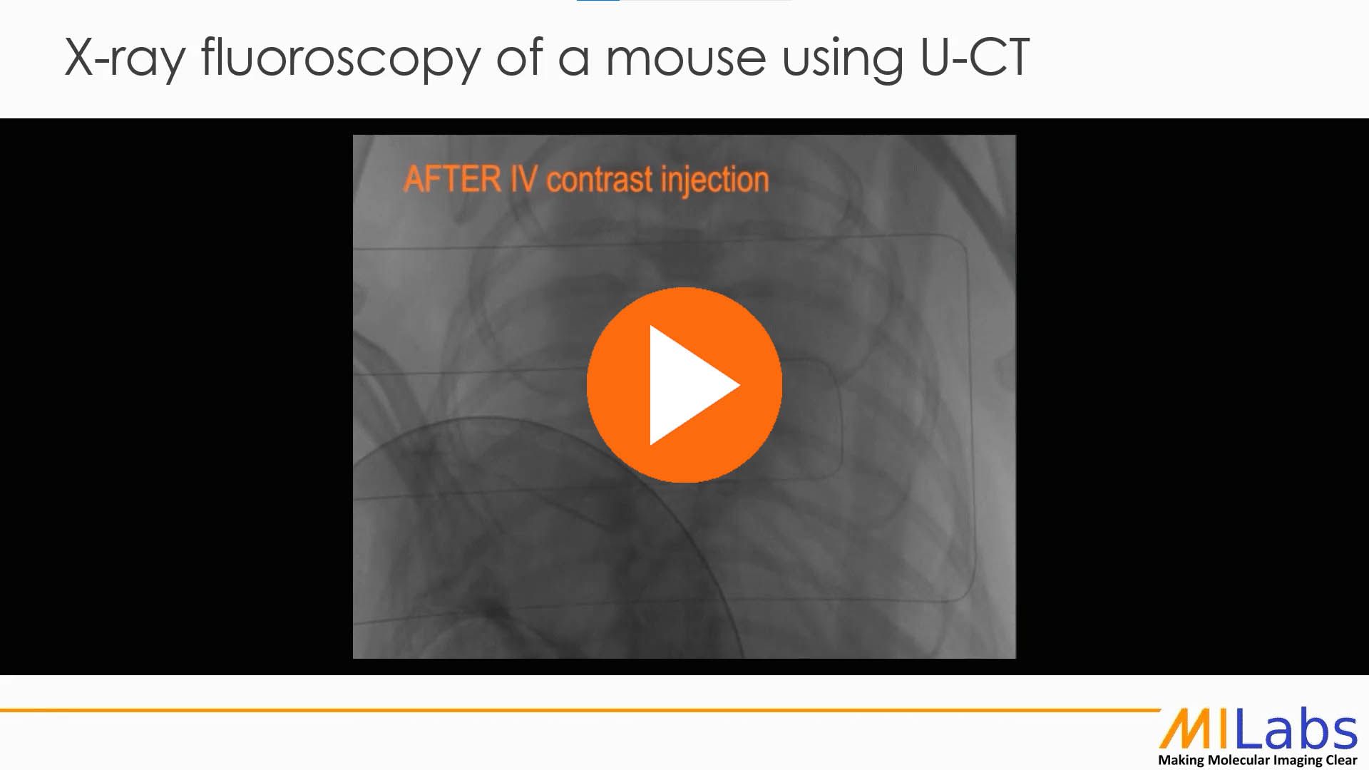 xray fluoroscopy of a mouse using microCT