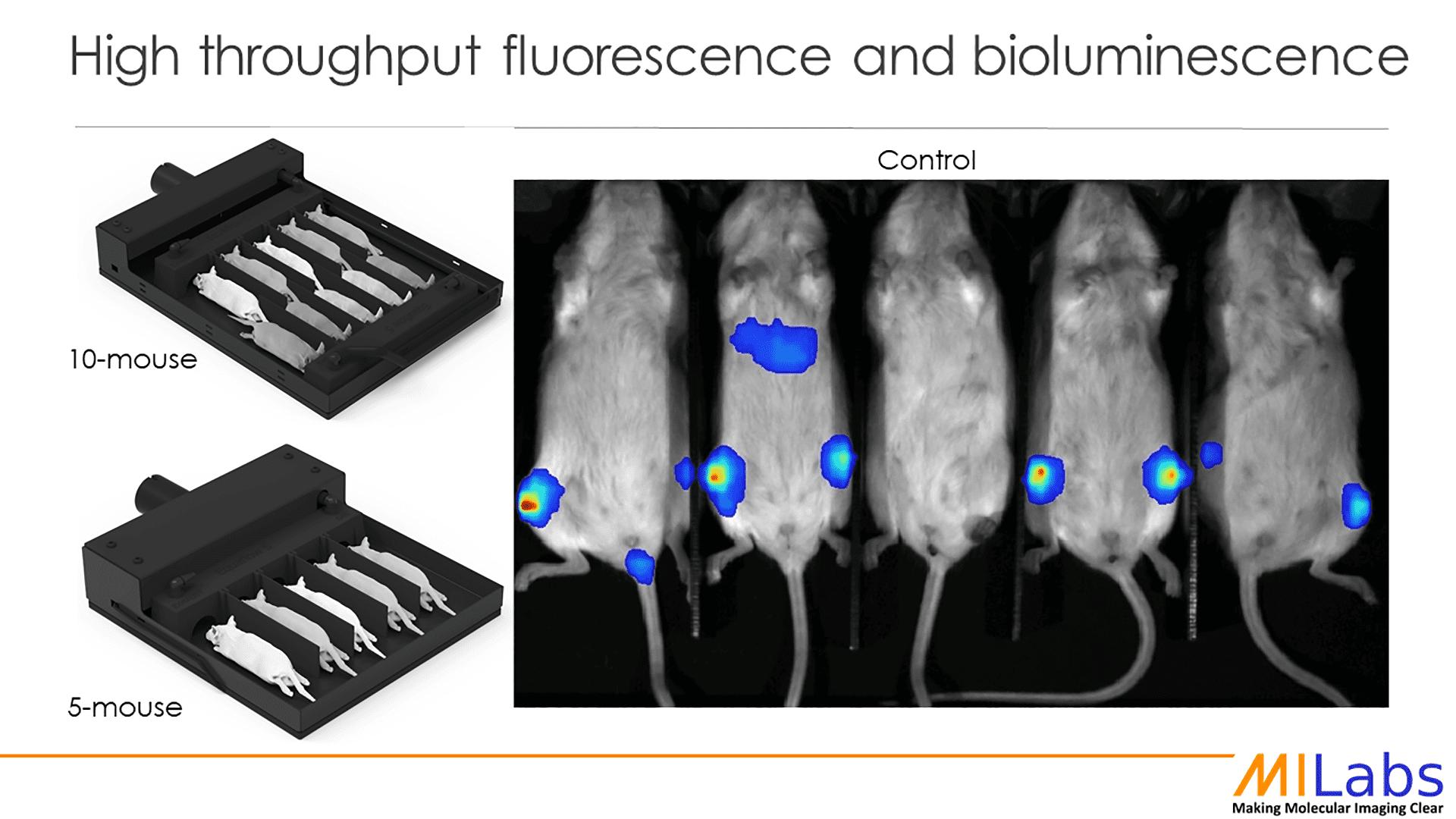 high throughput fluorescence and bioluminescence