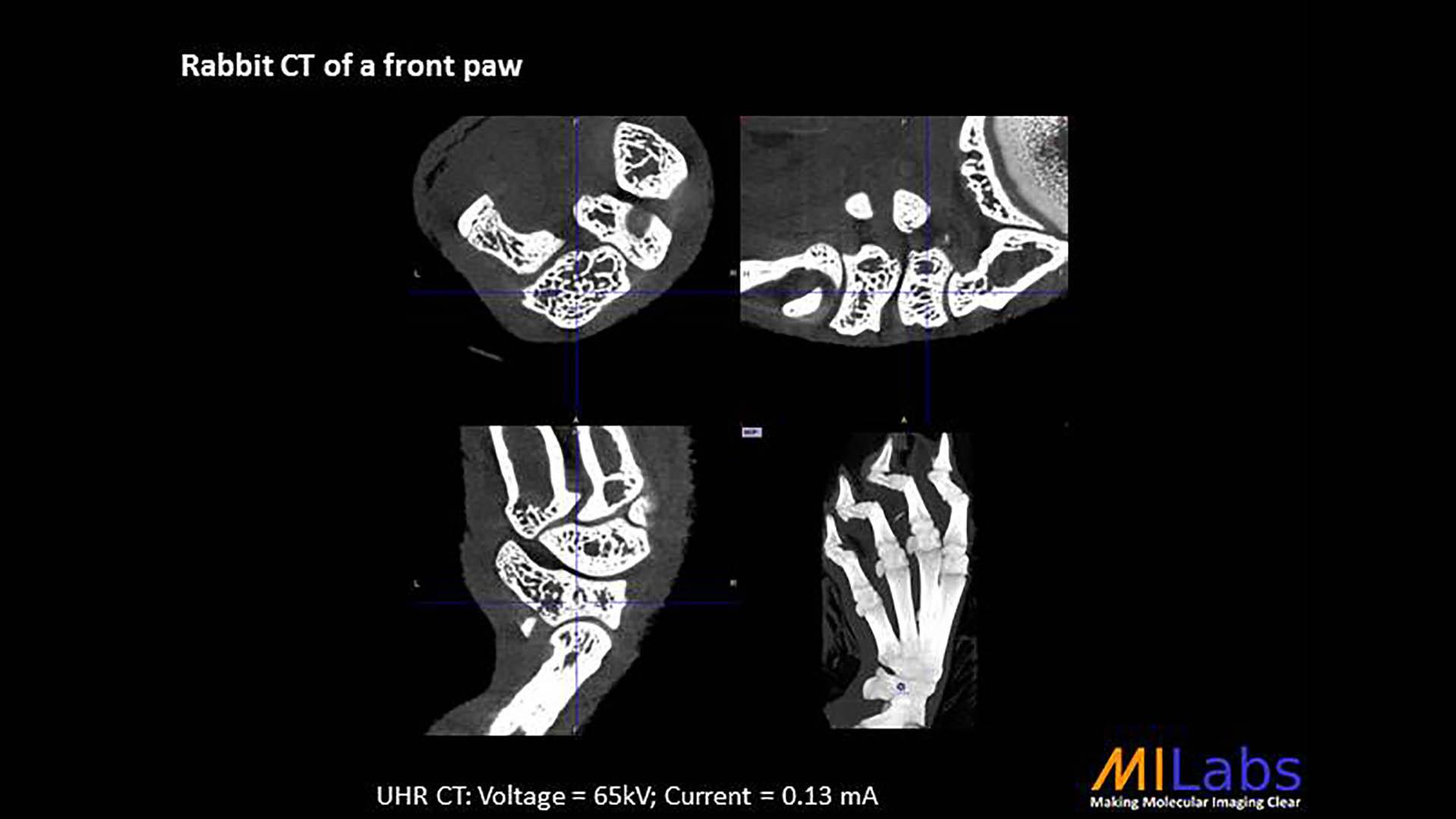 microCT rabbit front paw